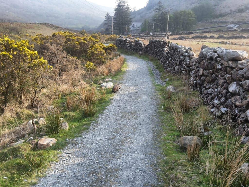 Snowdonia: Climbing Up, Riding Back 43